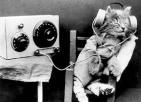cat-cute-fun-lol-music-favim-com-155218